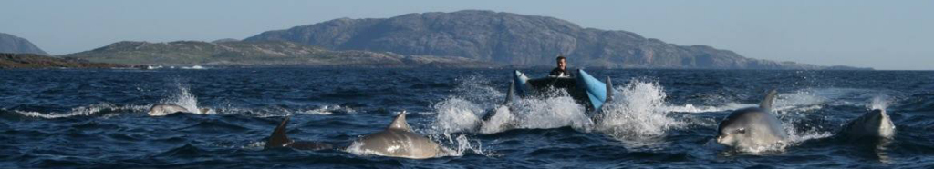 Dolphins in front of Seat Trek RIB